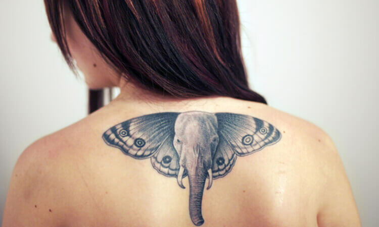 Elephant Butterfly Tattoo Designs on Back
